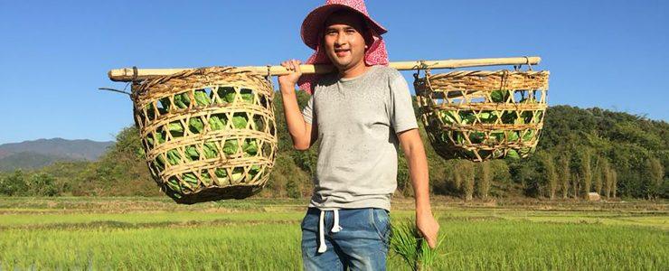 Pink Myanmar